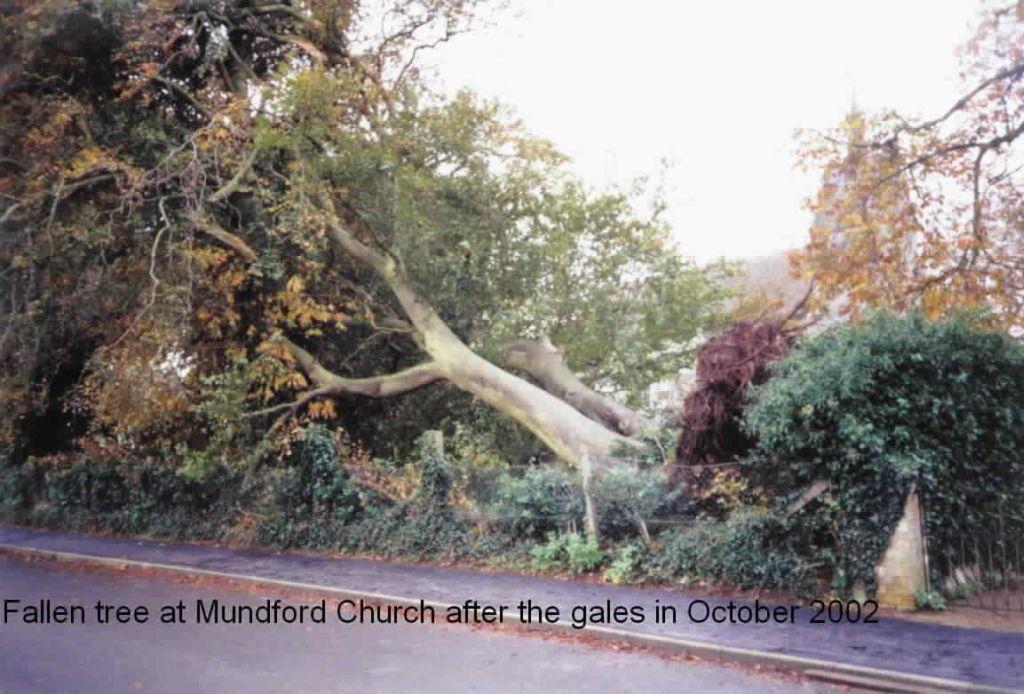 fallen-tree-mundford-church-2002