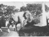 elephant-in-mundford-002