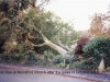 fallen-tree-mundford-church-2002